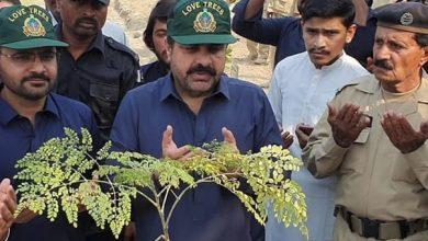 Photo of نئے سال میں سندھ میں زیادہ سے زیادہ درخت لگائیں گے,ناصر حسین شاہ
